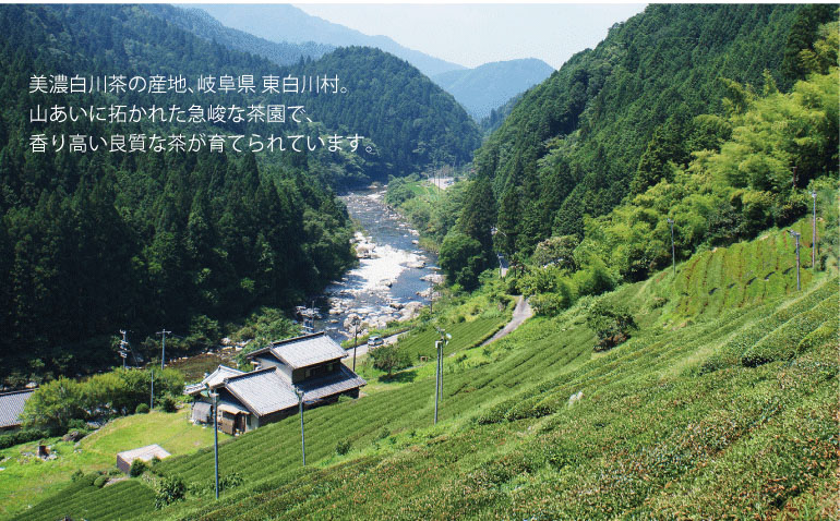 SALIUの茶香炉に付属する美濃白川茶。岐阜県東白川村の茶園で育てられています。